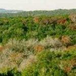 Black_Hill_from_Friedrich_Wilderness_Park._San_Antonio,_TX